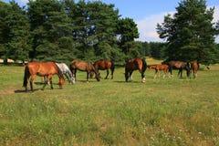лужок лошадей стоковое изображение