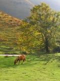 лужок лошади стоковые изображения rf
