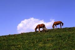 лужок лошадей Стоковые Изображения