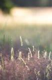 Лужок на заходе солнца Стоковые Изображения