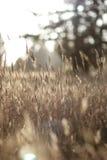 Лужок на заходе солнца Стоковое Изображение RF