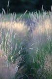 Лужок на заходе солнца Стоковые Изображения RF
