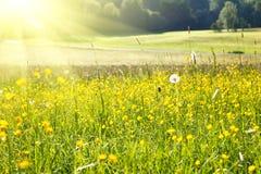 лужок солнечный Стоковые Изображения