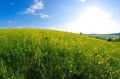 Лужок с одичалыми цветками Стоковые Фото
