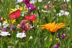 Лужок с цветками лета Стоковые Фотографии RF