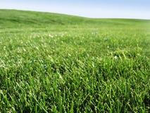 лужок травы Стоковое Фото