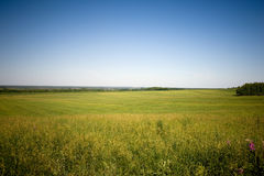 лужок травы Стоковое фото RF