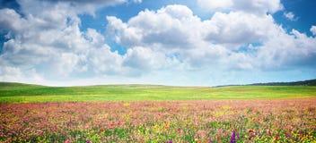 Лужок цветка весны Стоковое Изображение RF