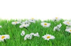 лужок цветка Стоковое Изображение