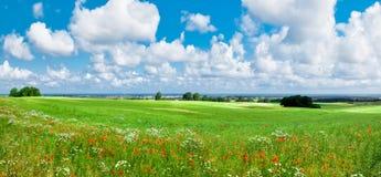 лужок цветка Стоковые Фото