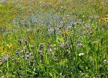 лужок цветков полный стоковая фотография rf