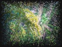 лужок 2 цветов Стоковые Изображения RF