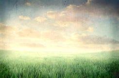 лужок Стоковое Фото