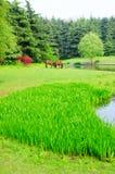 лужок Стоковая Фотография