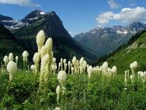 лужок beargrass Стоковые Изображения RF