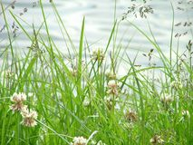 лужок s травы Стоковые Изображения