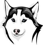 Лукавый волк Стоковая Фотография