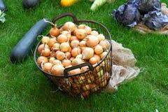 Луки в ведре металла и других овощах на заднем плане на траве Стоковые Изображения