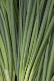 луки предпосылки зеленые Стоковые Фотографии RF