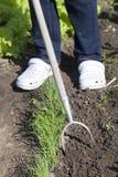луки прорастания Стоковая Фотография RF