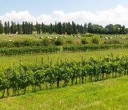 Лукка (Тоскана, Италия), сельская местность Стоковая Фотография