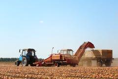 Лук жать с современным аграрным оборудованием стоковое изображение