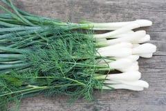 лук-порей укропа зеленый стоковые фото
