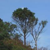 Лунатируйте сидеть в подоле дерева Стоковая Фотография