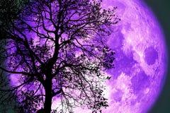 Луна грома на ночном небе назад над деревом силуэта темным стоковое изображение rf