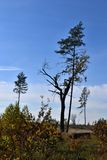 Луна и дерево Стоковые Изображения RF