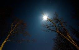 Луна и звезды через ветви Стоковая Фотография