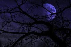 Луна и метеорный ливень в ноче Стоковая Фотография RF