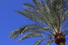Луна и пальма дня Стоковая Фотография RF