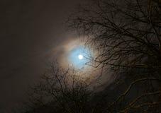 Луна на ветви Стоковое Фото