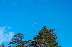 Луна на небе Стоковое фото RF
