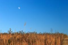 Луна над полем стоковая фотография rf
