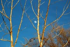 Луна дневного времени Стоковое Изображение