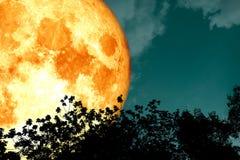 луна полной крови над деревьями верхней части силуэта и красочным небом бесплатная иллюстрация