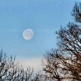 Луна утра зимы Стоковая Фотография