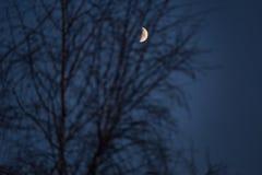 Луна через ветви на ноче стоковое изображение rf