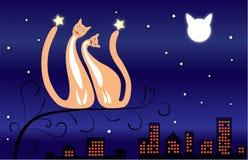 луна 2 котов Стоковые Фото