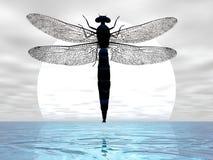 луна dragonfly Стоковое Изображение