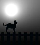 лунный свет кота Стоковое Изображение RF