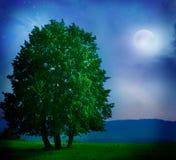лунный свет ландшафта Стоковая Фотография