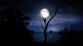 Лунный свет с силуэтом предпосылки анимации графиков движения сыча иллюстрация штока