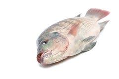 луциан рыб Стоковые Изображения RF