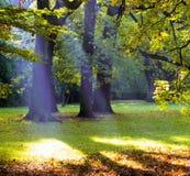 Лучи бога в парке Стоковая Фотография