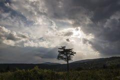 Лучи бога и уединённый спрус Стоковая Фотография RF