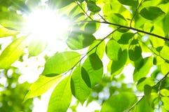 лучи ветвей греют на солнце вал Стоковая Фотография
