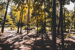 лучи ветвей греют на солнце вал Стоковое Изображение